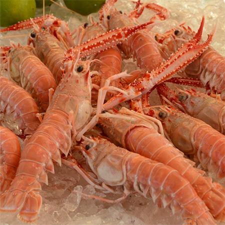 lagostin-thumb1